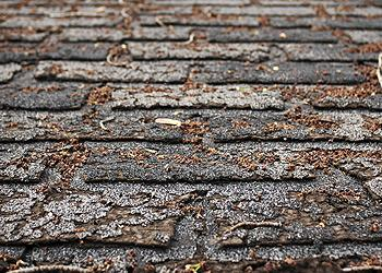 Bluffton Roofing Company Images